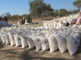 200 Maize bags